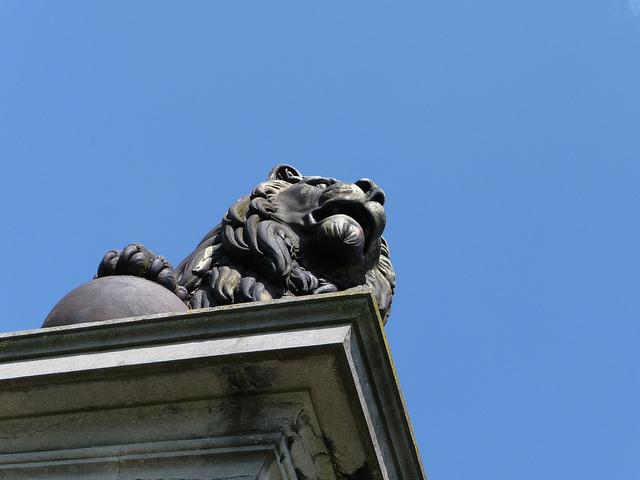 lionwaterloo